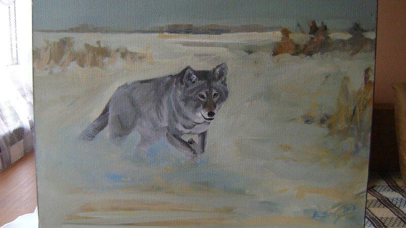 Wilk samotnik