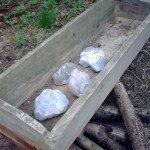 Sól kamienna w lizawce korytowej