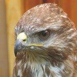 To ptak piękny i dumny